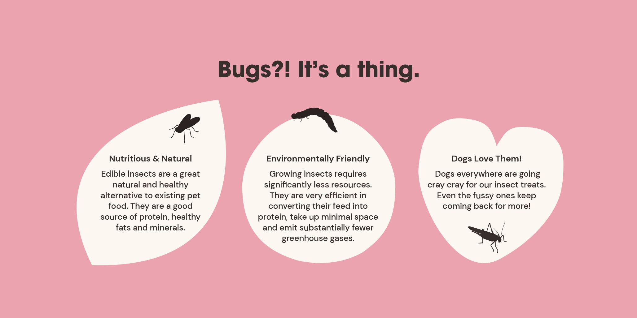Website Design project image for pet food website design by Percept creative agencies Sydney, case study image D